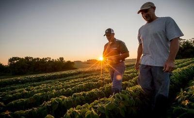 Men walking in midseaon soybean field