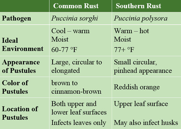 This table shows distinguishing characteristics of common vs. southern rust.