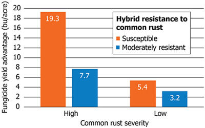 Average fungicide yield response of hybrids.