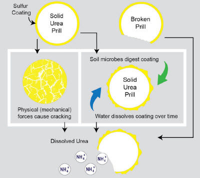 Breakdown of sulfur-coated urea.