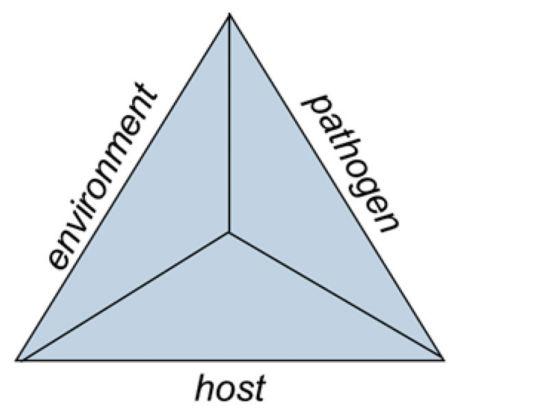 Corn disease triangle.