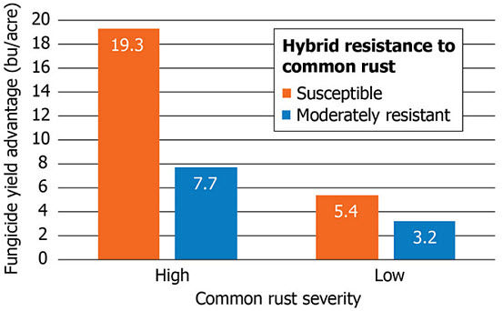 Chart showing average fungicide yield response of hybrids with low resistance and moderate resistance to common rust in Pioneer research trials in 2009.