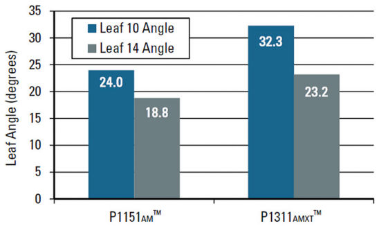 Average angle of leaf 10 and leaf 14 for Pioneer P1151AM™ brand corn and Pioneer P1311AMXT™brand corn.
