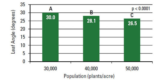 Average angle of the 10 leaf (degrees from vertical) as affected by plant density.