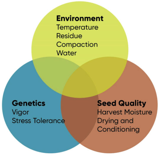 Chart showing critical environmental, genetic, and seed quality factors that affect corn stand establishment