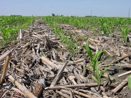 Greater corn residues in no-tillage systems have been associated with higher plant populations, transgenic insect traits, and greater use of foliar fungicides.
