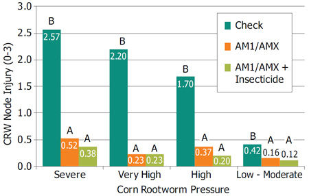 Corn rootworm injury (CRW) scores with AM1/AMX products under different degrees of CRW pressure.