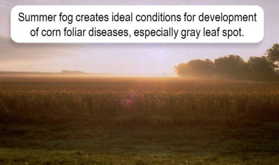 summer fog over field