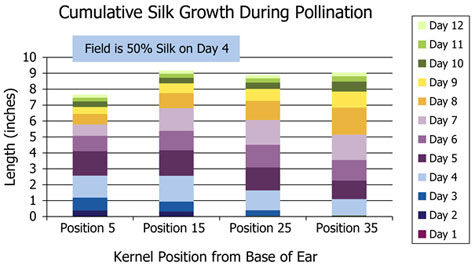 Cumulative silk growth during corn pollination.