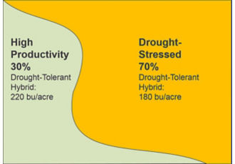 Primarily drought-stressed field planted entirely to a drought-tolerant hybrid, yield results.