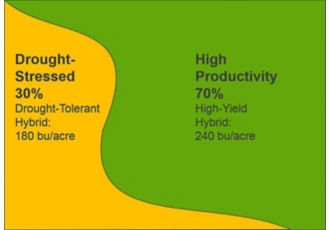 Primarily high-productivity field with variable hybrid placement, yield results.