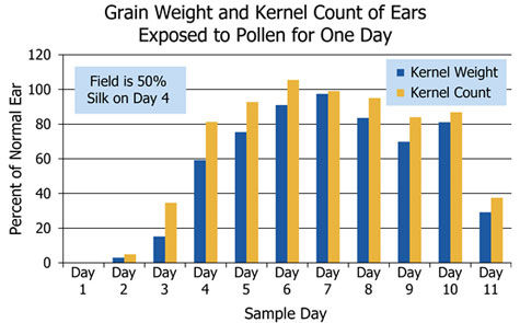 Ear weight and kernel count of ears exposed to pollen for 1 day.