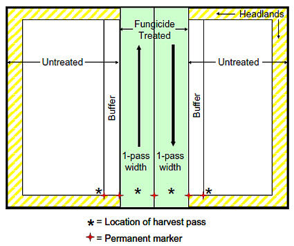 Recommended layout for an on-farm fungicide vs. untreated SXS comparison.