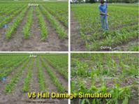 V5 Hail Damage Simulation