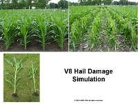 V8 Hail Damage Simulation