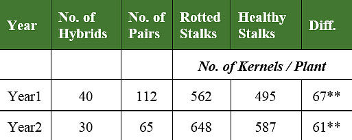 Table comparing kernel numbers between corn plants with rotted stalks and adjacent plants with healthy stalks.