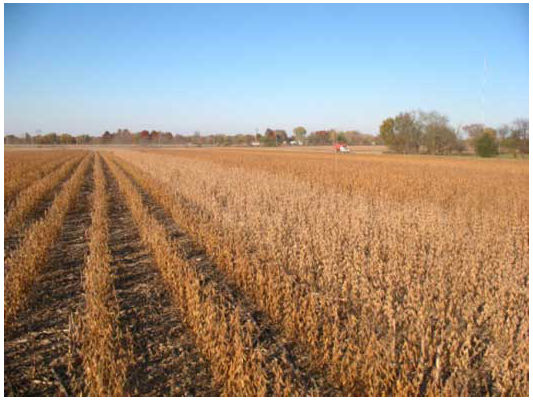 Timely soybean harvest is critical, as repeated wet and dry cycles prior to harvest can significantly impact seed quality.