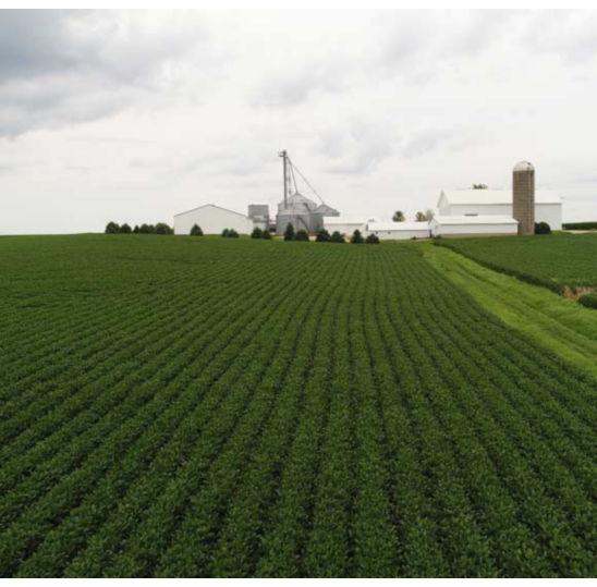 Long view photo - soybean field - midsummer