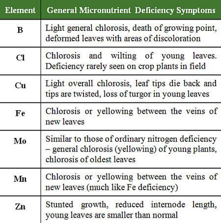 General micronutrient deficiency symptoms
