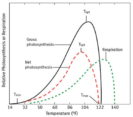 Temperature effects on rates of gross photosynthesis, respiration, and net photosynthesis.