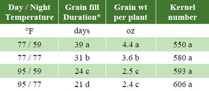 Effect of temperature on grain fill duration, grain weight per plant and kernel number.