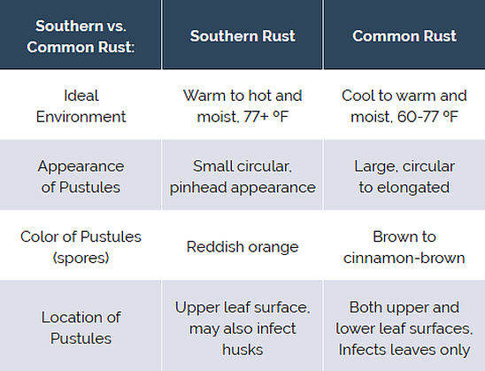 Southern vs. Common Rust