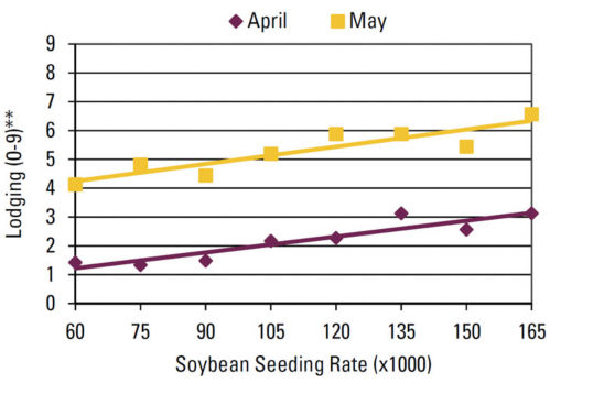 Chart - Seeding rate effect on lodging by planting date.