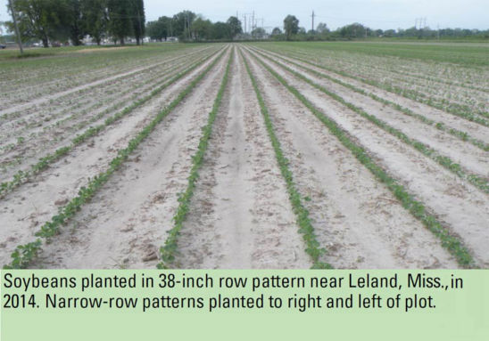 Soybeans planted in 38-inch row pattern near Leland, Miss. in 2014. Narrow-row patterns planted to right and left of plot.