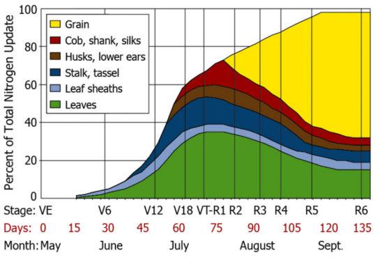 Nitrogen uptake by corn