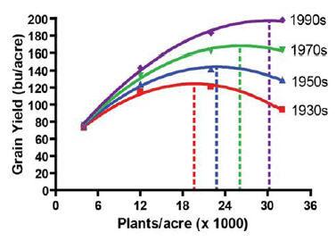 Grain yield response to plant population