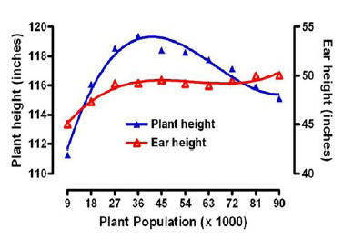 Plant and ear height response to plant population.