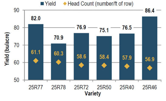 Average yield and head count of wheat varieties in descending head count order.