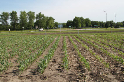 CC is often more sensitive than CS to environmental conditions that limit N availability, such as drought and leaching.