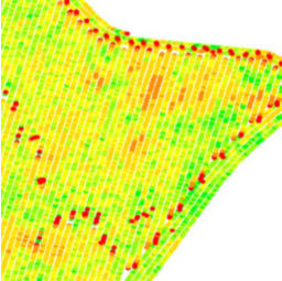 Yield monitor map showing grain flow lag.