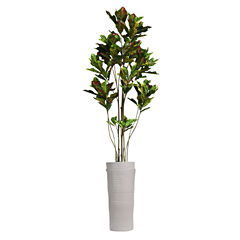Laura Ashley 93 Inch Tall Croton Tree With Multiple Trunks In Planter