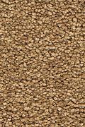 Mohawk Stylish Story I - Sun Tea Carpet
