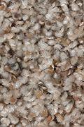 Mohawk Revealing Beauty - Heirloom Carpet