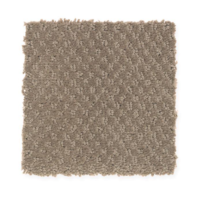 Soft Cheer Velvet Brown 879