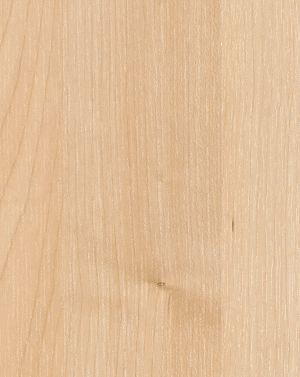 Northern Maple