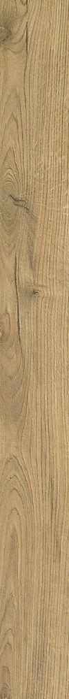 Calvary Oak