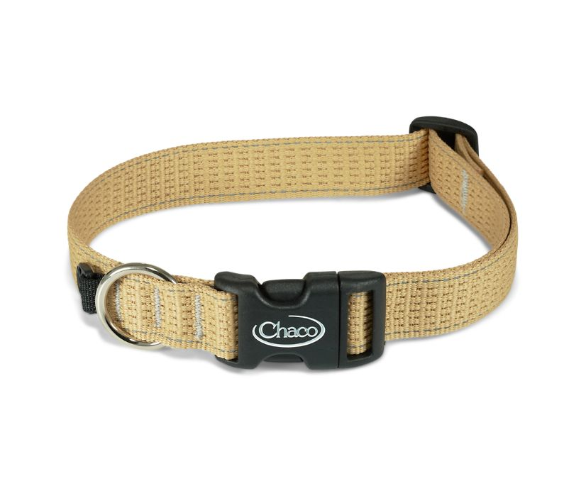 Chromatic Dog Collars, Curry, dynamic