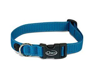 Chromatic Dog Collars, Cerulean, dynamic