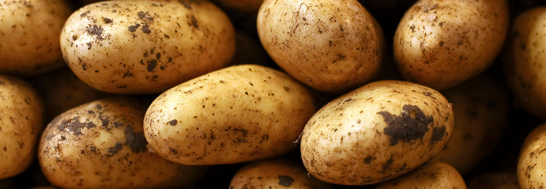 potato-image