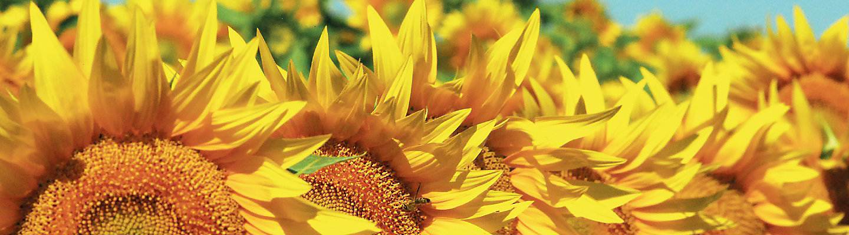 Banner Floare Mobile