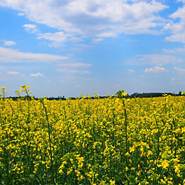 Crop Protection Galera Image Desktop