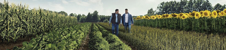 two men walking in a field