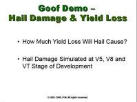 Good Demo - Hail Damage & Yield Loss
