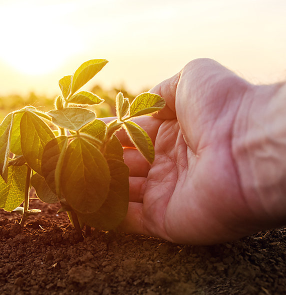 Hand Plant DESKTOP