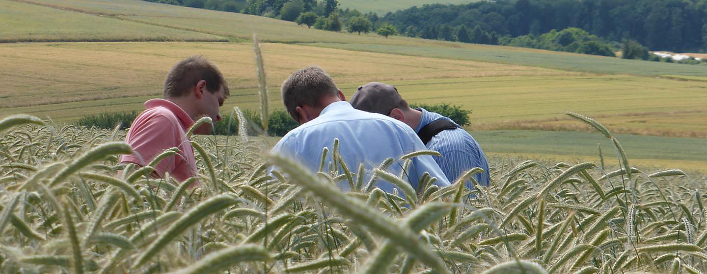 3 mænd studerer korn