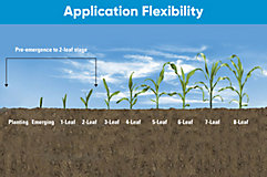Application timing for corn